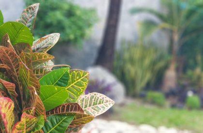 decoracion-de-jardines-1